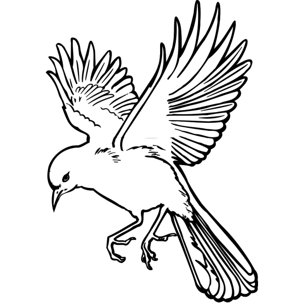 Flying Dove PNG images