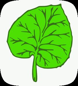 Large Leaf PNG Clip art
