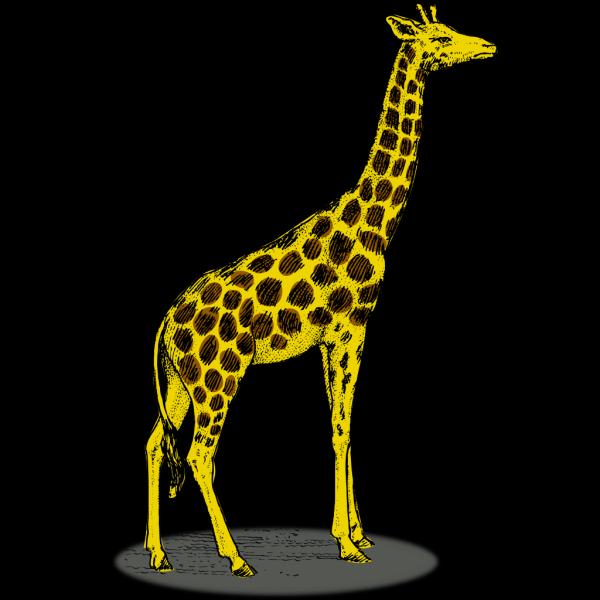 Giraffe PNG Clip art