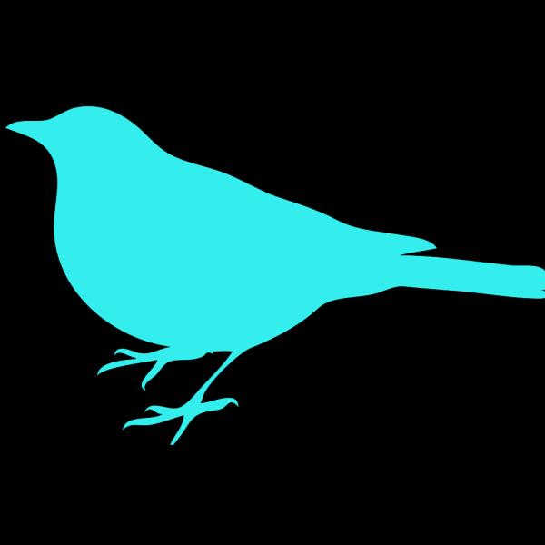 Aqua Bird PNG Clip art
