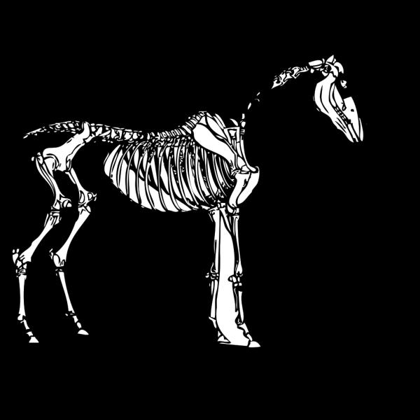Bone PNG images
