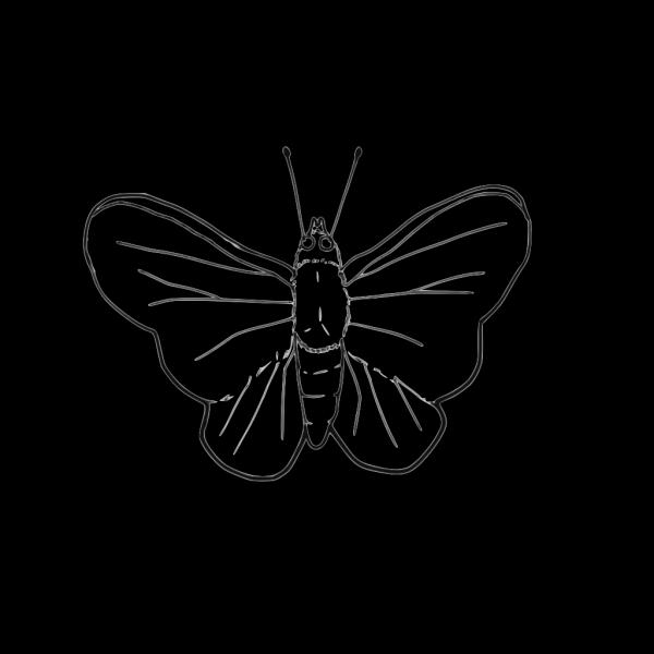 Butterfly (line Art) PNG Clip art