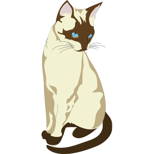 Gatto Cat 4 PNG images