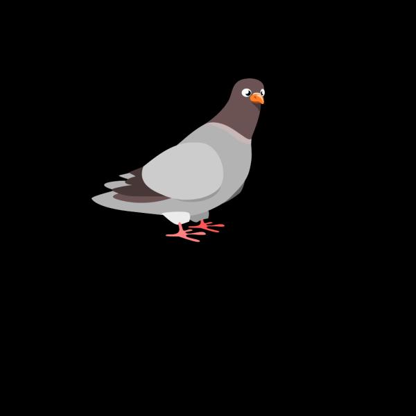 Cartoon Pigeon PNG Clip art