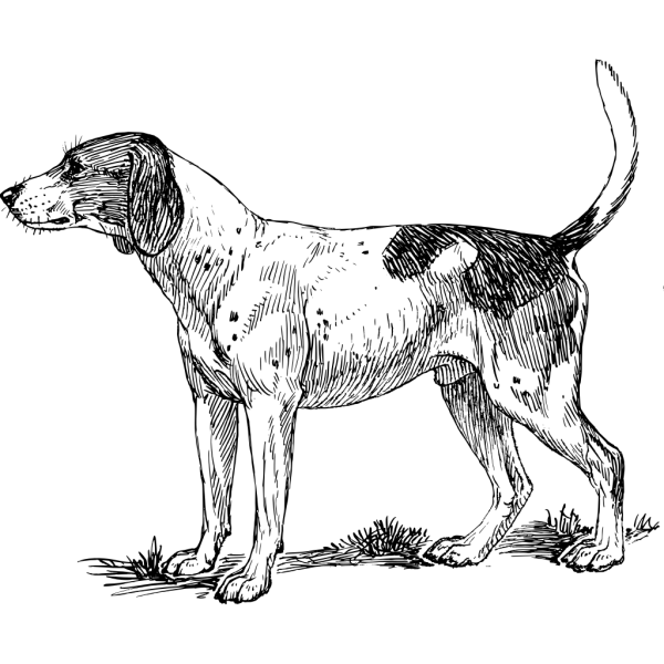 Hound Dog PNG Clip art