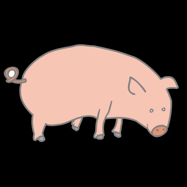 Pig 11 PNG Clip art