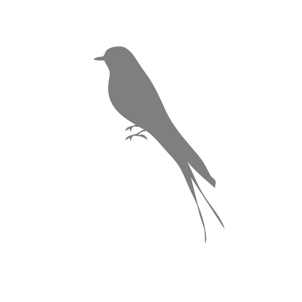 Bird Stand Grey PNG images