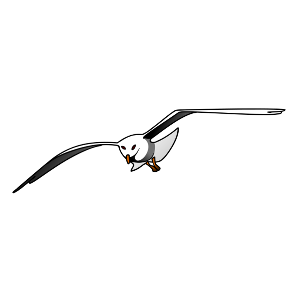 Seagull PNG images