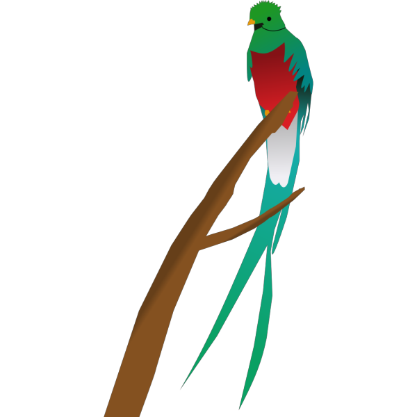Tropical Bird PNG Clip art
