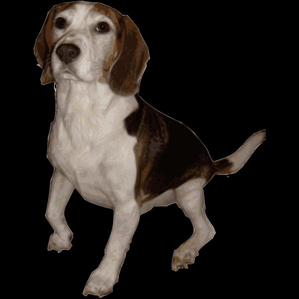 Beagle PNG Clip art