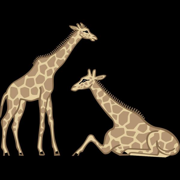 Giraffes PNG Clip art