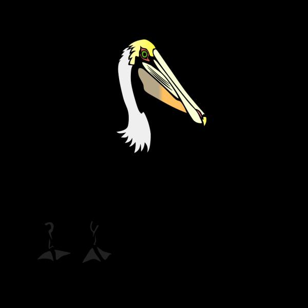 Pelican PNG Clip art