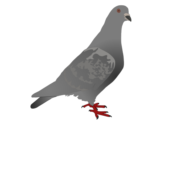 Black Pigeon PNG Clip art