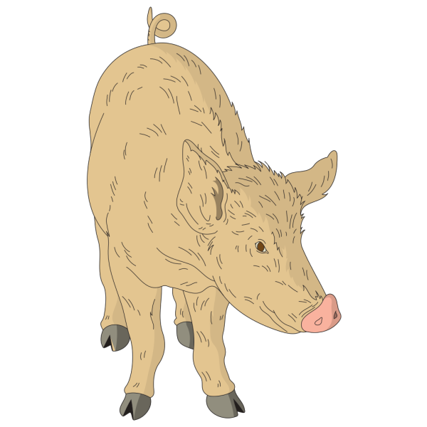 Hairy Pig PNG Clip art