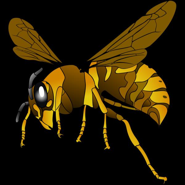Brown Yellow Hornet PNG Clip art