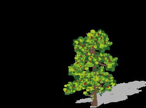 Redwood Tree Brown Green PNG Clip art