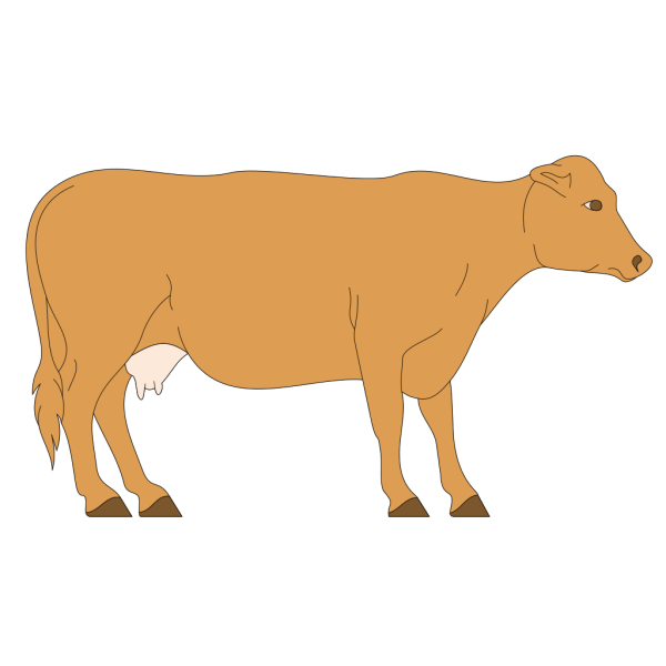 Brown Cow Side View PNG Clip art