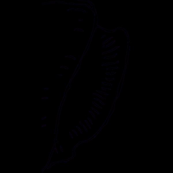 Seashells PNG Clip art