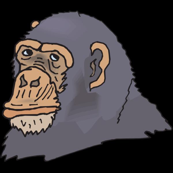 Gray Chimp Head PNG Clip art
