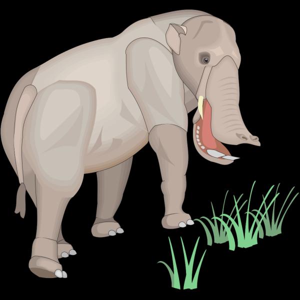 Platybelodon PNG Clip art