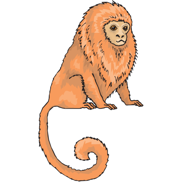 Marmoset PNG Clip art