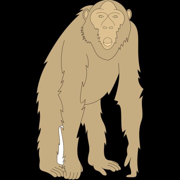 Staring Monkey PNG Clip art