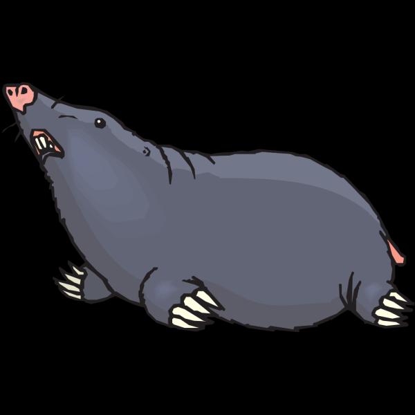 Mole Looking Up PNG Clip art