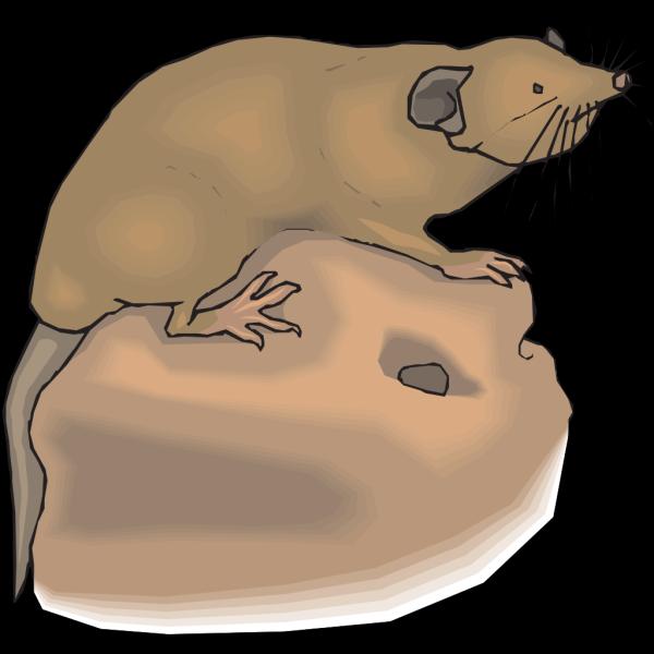Mole Aboveground PNG Clip art