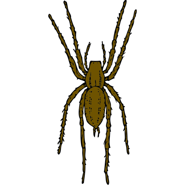 Brown Spider PNG Clip art
