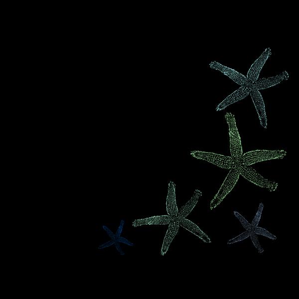 Starfish Wedding PNG Clip art