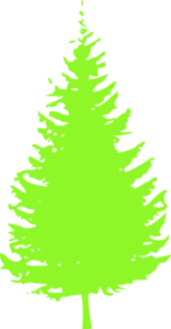 Pine Tree PNG Clip art