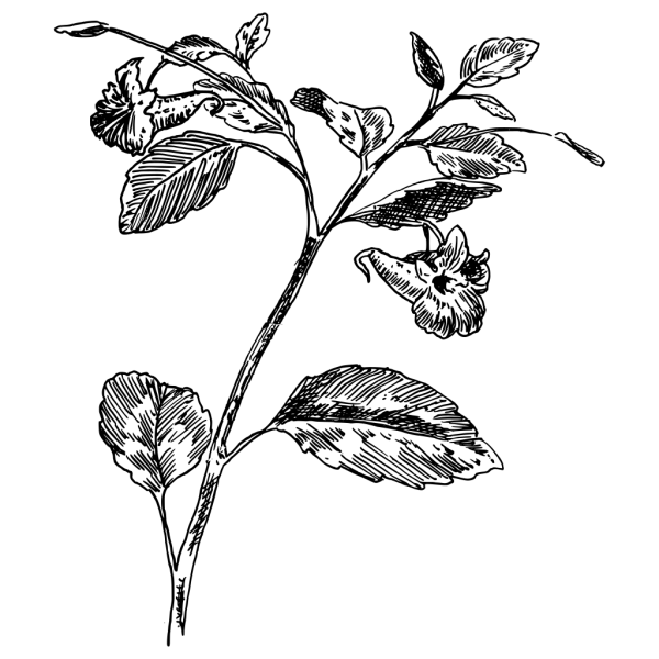 Brown Log With Leaf PNG Clip art