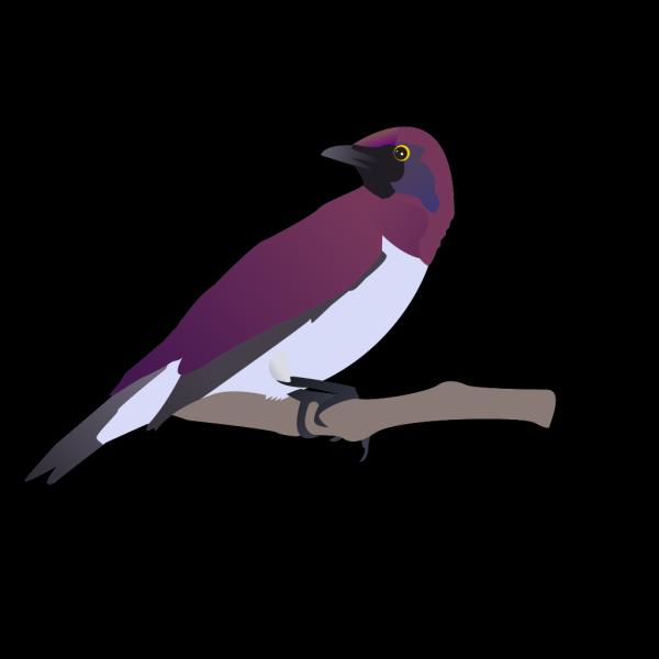 Exotical Bird PNG Clip art