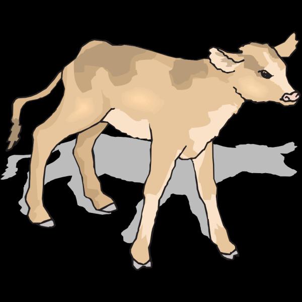 Curious Calf PNG Clip art