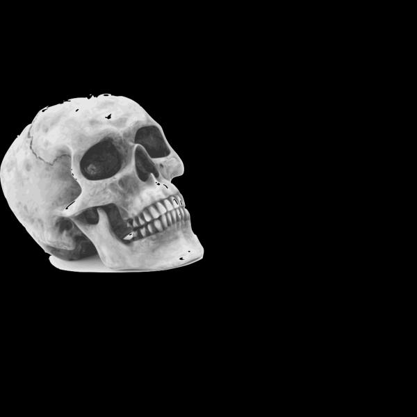 Skull In Graveyard PNG Clip art