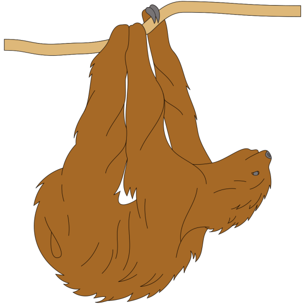 Hanging Sloth PNG images