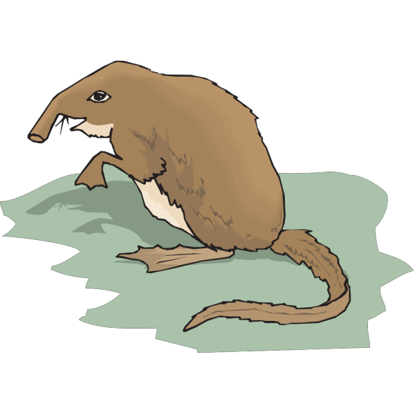 Long Nosed Shrew Standing Up PNG Clip art