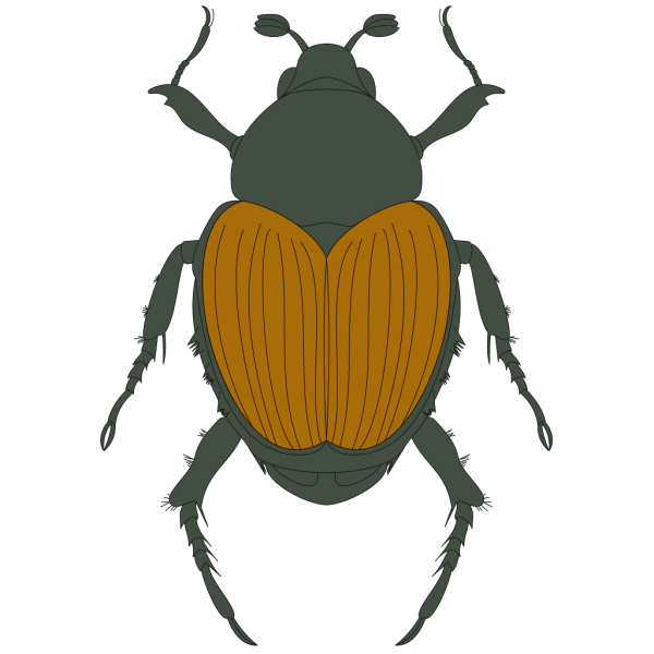 Green And Brown Beetle PNG Clip art