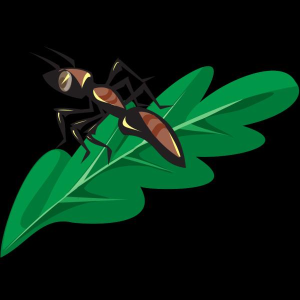 Brown Ant On A Leaf PNG Clip art