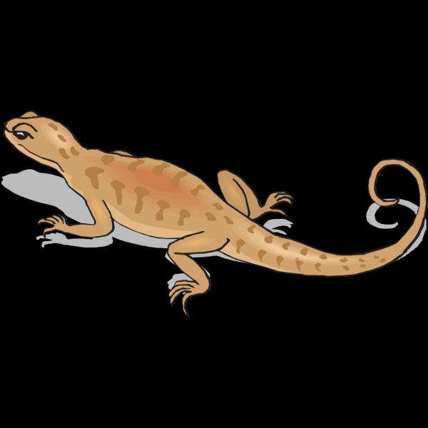 Brown Salamander Walking Away PNG Clip art