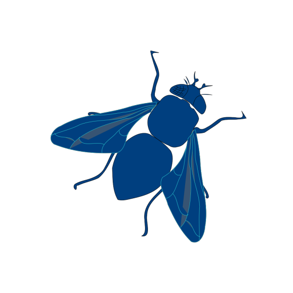 Blue Fly PNG Clip art