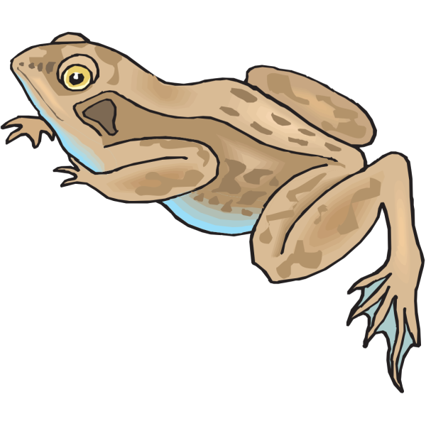 Brown And Blue Frog PNG Clip art