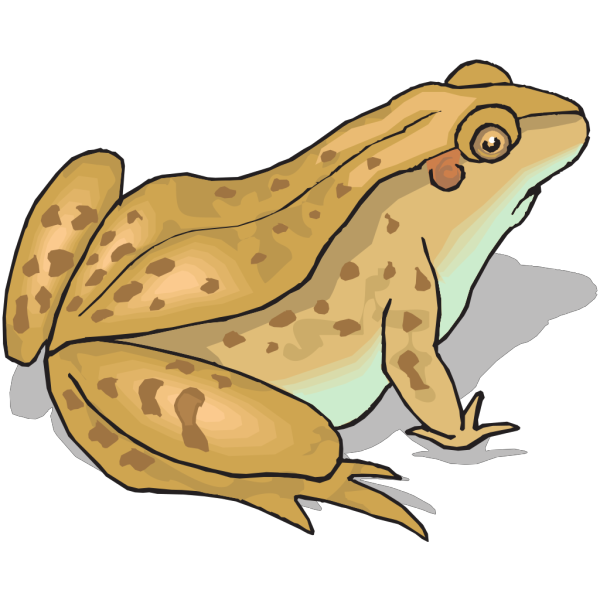 Brown Spotted Frog PNG Clip art