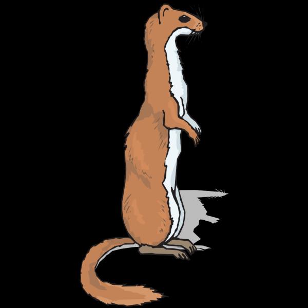 Brown Standing Ferret PNG Clip art