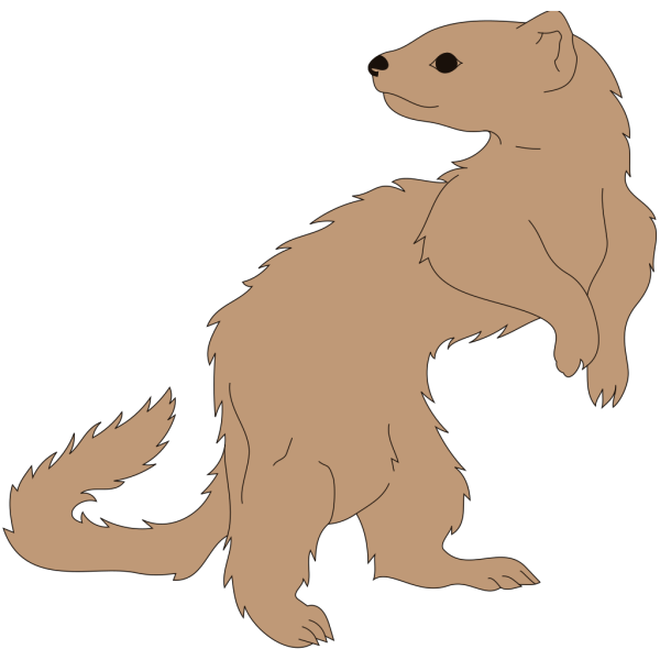 Ferret Looking Back PNG Clip art