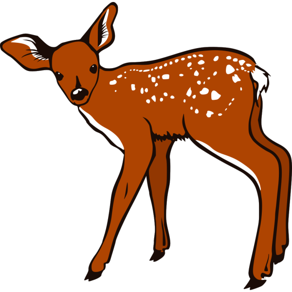 Fawn PNG Clip art