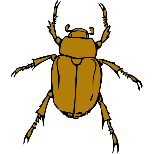 Chafer Bug PNG Clip art