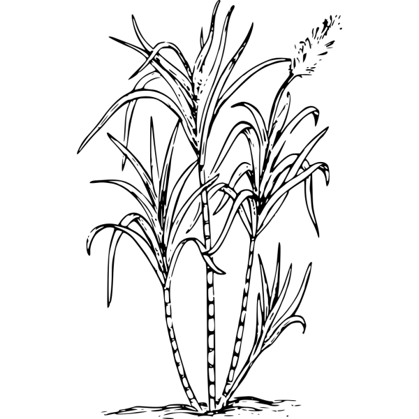 Sugar Cane PNG icon