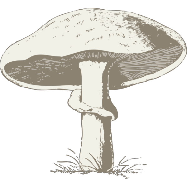 Mushroom-miri