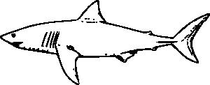 White Shark Outline PNG Clip art